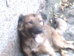 Bob Rip, chien