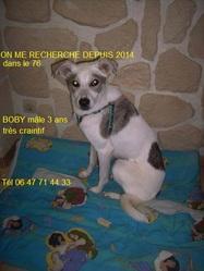 Boby, chien