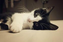 Boby, chat Gouttière