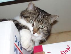 Bohème, chat