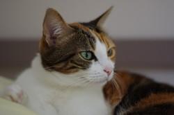 Bonnie , chat Gouttière