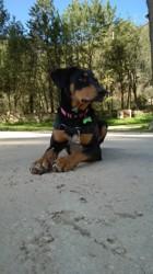Bonnie, chien