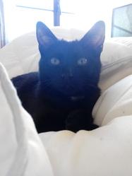 Charlie, chat Gouttière