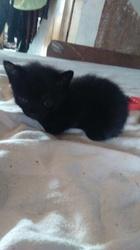 Booba, chat Gouttière