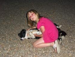Boris, chien Border Collie