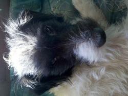 Bosco , chien