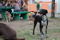 Botas, chien Dalmatien