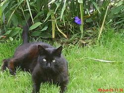 Bouboul, chat