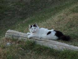 Bouboule, chat