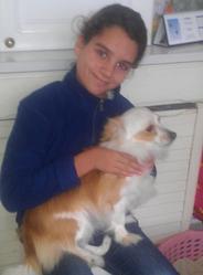 Bouboule, chien Chihuahua