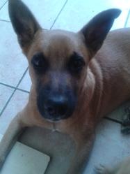 Bouboule, chien