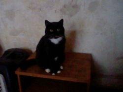Boudain, chat Gouttière