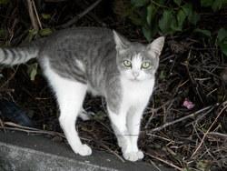 Boudou, chat Gouttière