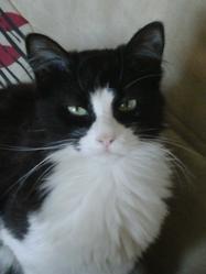 Bouh, chat Gouttière