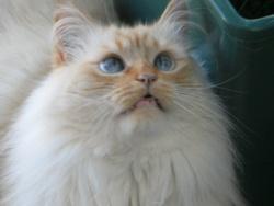 Boule De Neige, chat
