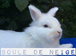 Boule De Neige, rongeur Lapin