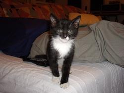 Boulette, chat