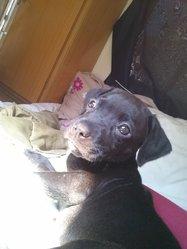Boulette, chien