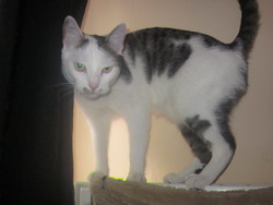 Boulyt, chat Gouttière