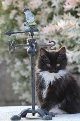 Bountie Au Paradis Des Chats, chat Gouttière