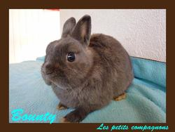 Bounty, rongeur Lapin
