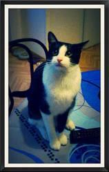 Bounty, chat Gouttière