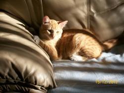 Bowser, chat Gouttière