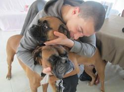 Boxy, chien Boxer