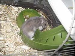 Boy, rongeur Hamster