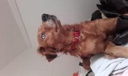 Bouboul, chien