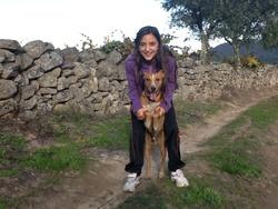 Braga, chien Whippet