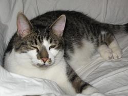Bretzel, chat Gouttière