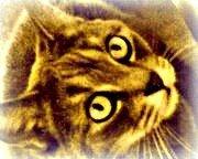 Brindille, chat