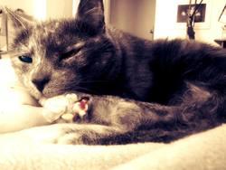 Brioche, chat