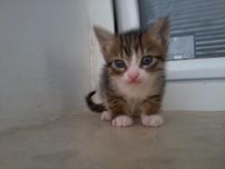 Brooney , chat Gouttière