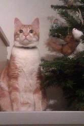 Bruno, chat Gouttière
