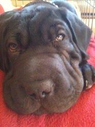Bruno, chien