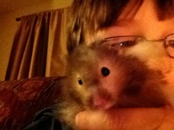 Bruno Le Hamster, rongeur