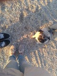 Bubull Angel Mcfly, chien Carlin