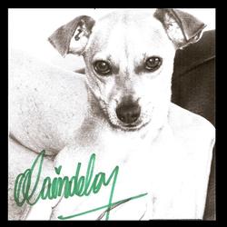 Buddy, chien Pinscher