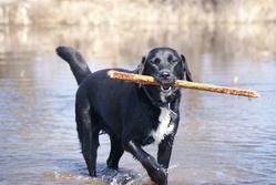 Buddy, chien