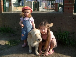Buddy, chien Fox-Terrier