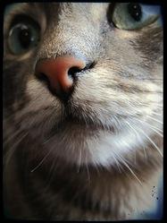 Buddy, chat Gouttière