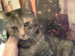 Buffie, chat Gouttière