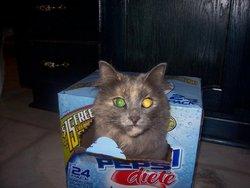 Buffy, chat Gouttière
