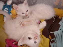 Bulma Et Chichi, chat