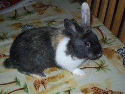 Bunny, rongeur