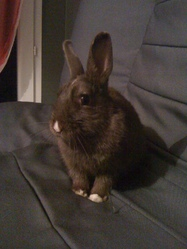 Bunny , rongeur Lapin
