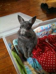 Bunny, rongeur Lapin