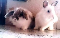 Bunny Et Nala, rongeur Lapin